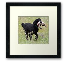 Beautiful Portuguese Water Dog