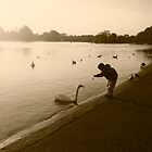 Boy with swan in Hyde Park, London by Elana Bailey