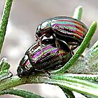 Love Bugs by John Thurgood