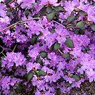 My Purple Bush by Linda Miller Gesualdo