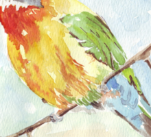 Whitefronted Bee-eater (Merops bullockoides) Sticker
