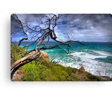 Rusty tree Canvas Print