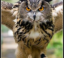 Look into my eyes!! by Shaun Whiteman