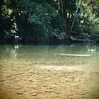 Skip - The Mulgrave River at Ross & Locke - Queensland - Australia by Paul Davis
