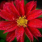 Bright Red by Keith G. Hawley