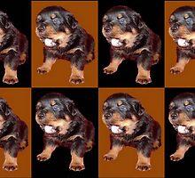 Rottweiler Pop Art by taiche