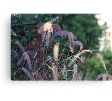 Fuzzy Tails Canvas Print