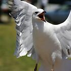 Seagull by Richard Hill