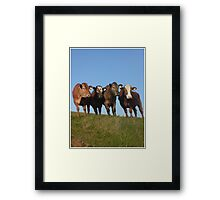 And the Cows in the Meadow go 'Moo!' Framed Print