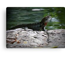 Reptile Rock Canvas Print