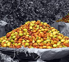Fruitful India by Sudhir Gahlot