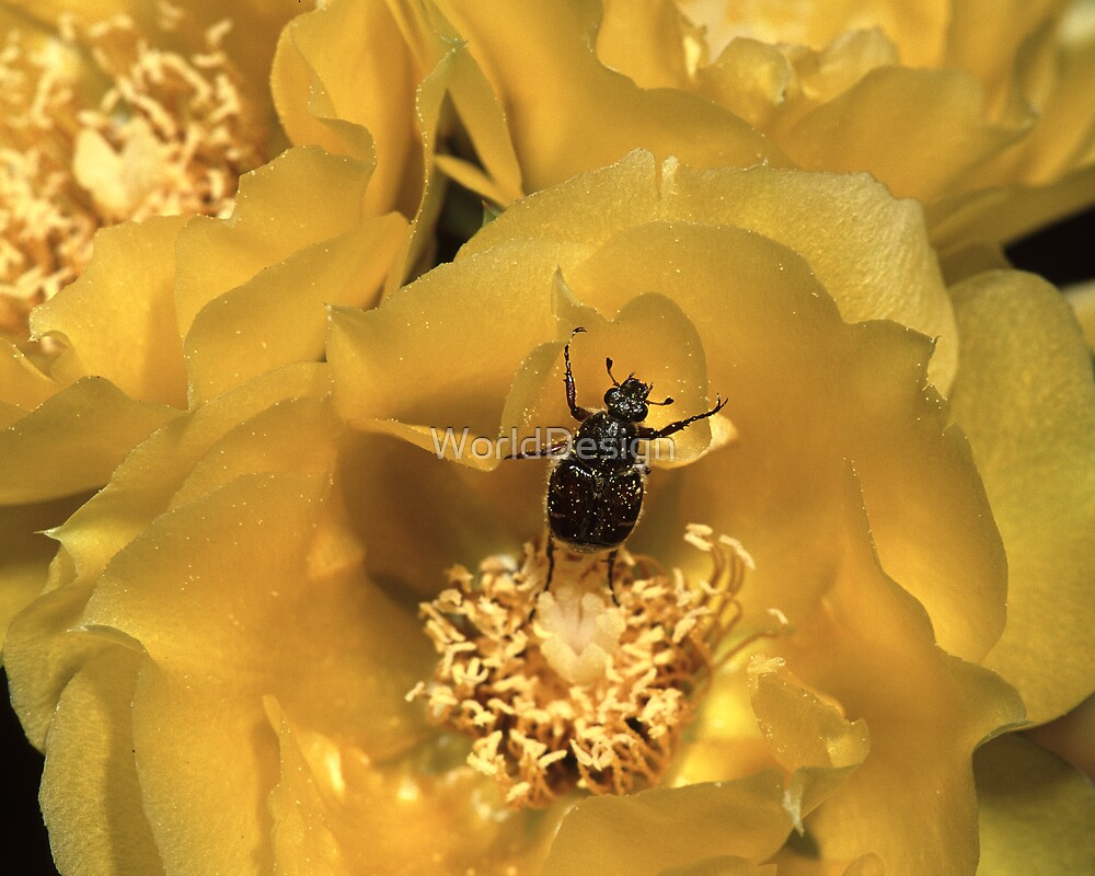 Beetle Dance by WorldDesign