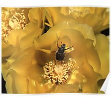Beetle Dance Poster