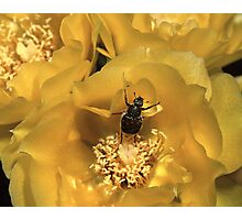 Beetle Dance Photographic Print