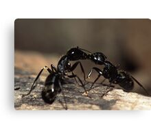 Ants Kissing Canvas Print