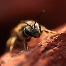 Springtime Bee by Evan Ludes