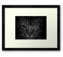 The hunt for prey Framed Print