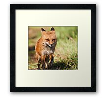 Ears Back Means Unhappy Framed Print