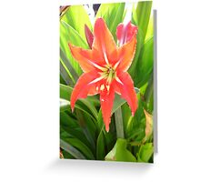 Orange Amaryllis Flower Blooms in Springtime Greeting Card