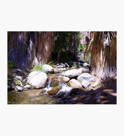 The Living Desert Stream Photographic Print