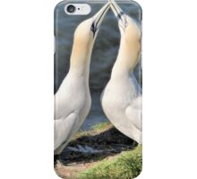 Gannets on Bempton Cliffs. iPhone Case/Skin