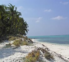 Coconut trees, sandy beach, and blue water of the Lakshadweep Islands by ashishagarwal74