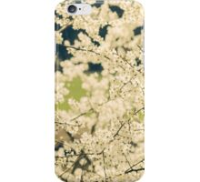 Springtime White Blossoms iPhone Case/Skin