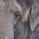 in an elephant's eye by jaffa
