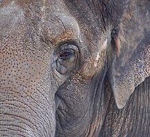 in an elephant's eye by jaffa