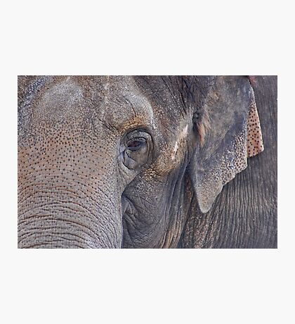 in an elephant's eye Photographic Print