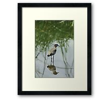Southern Lapwing in a Lake Framed Print