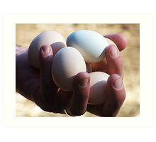Handful Of Chicken Eggs Art Print