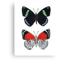 88 butterfly Canvas Print
