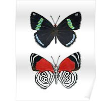88 butterfly Poster