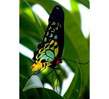 Birdwing 2 Photographic Print
