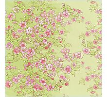 Watercolor Cherry Blossoms on Green Wash Photographic Print