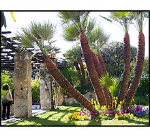 Magnificent palm trees Photographic Print