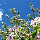 Apple Blossom by Mike Paget