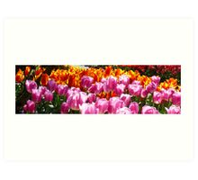 Tulip Festival Panorama One Art Print