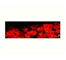 Skagit Valley Tulip Festival Panorama Four Art Print