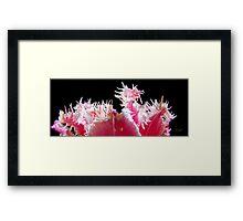 Skagit Valley Tulip Festival Panorama Six Framed Print
