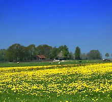 Landscape with Dandelions by ienemien