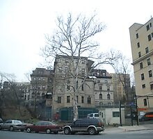 A Tree Grows in the Bronx by Heather Harvie