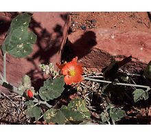 Desert Bloom Photographic Print