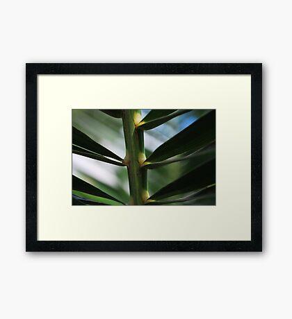 Plant Framed Print
