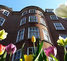 City Tulips by Vanessa  Warren