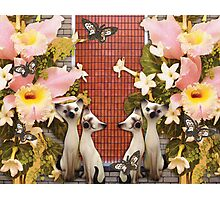 Kittens and Flowers and Butterflies, O My! Photographic Print