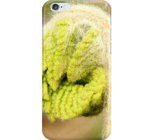 Fiddlehead of Cinnamon Fern 2 iPhone Case/Skin
