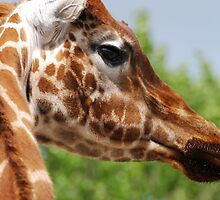 Giraffe by Luci Mahon