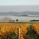 Yarra Valley Vines by Donna Vanderspek